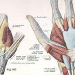L'ABC dei Movimenti Ripetitivi: le Patologie e i Fattori di Rischio